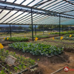 Green-OS Organic Farm – Organic vegetables from farm to table in Kota Kinabalu